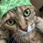 メロンな猫
